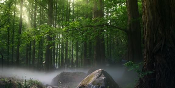 Mars, un mois dédié à nos forêts